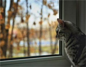 Как подготовить окна к наступлению зимы